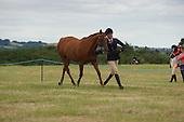 Class 12 - Veteran Horse & Pony
