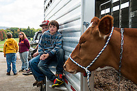 Zack Sullivan and Bruce Rawnsley from Mrs. Zink's 4th grade Barnstead Elementary class learn about Guernsey dairy cattle with Matty Huckins (not pictured) during Wednesday's Field Trip to Ramblin' Vewe Farm in Gilford.   (Karen Bobotas/for the Laconia Daily Sun)