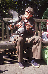 Elderly man sitting on park bench feeding pigeons,