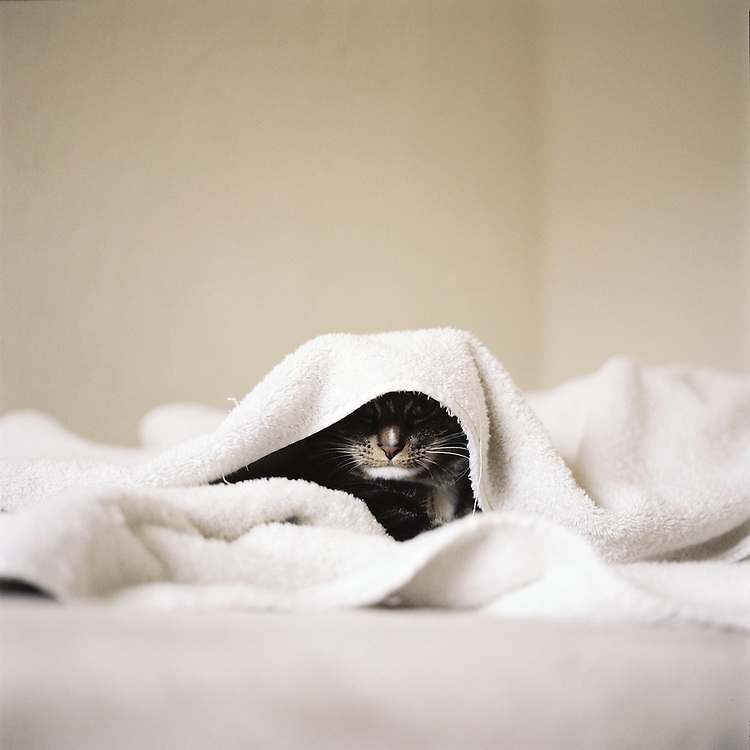 Pearl under warm towels. 2011