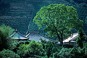 Image of buildings and tea terraces in Wakayama Prefecture, Japan