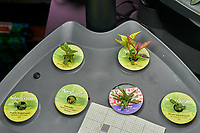 """AeroGarden """"Clasic 6"""" Garden 02 at Day 49. Position 01-02: Celosia (Rainbow Fire); Position 03: Purple Snapdragon; Position 04: Lavender; Position 05: Dianthus; Position 06: Purple Snapdragon. Image taken with a Leica TL-2 camera and 35 mm f/1.4 lens (ISO 100, 35 mm, f/5.6, 1/80 sec)."""