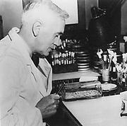 Alexander Fleming (1881-1955) Scottish bacteriologist. Discovered penicillin 1928. Photograph