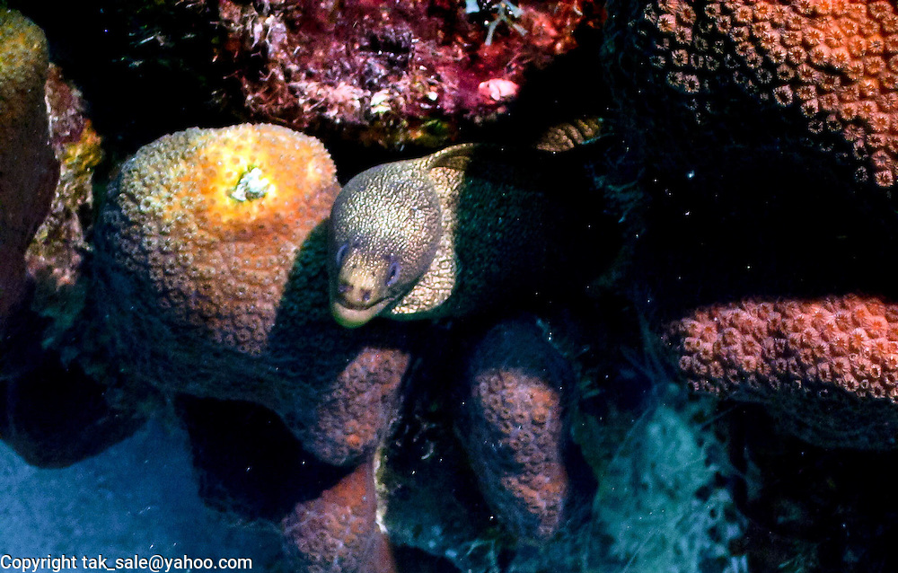 Sneaky eel, peeking out from his lair