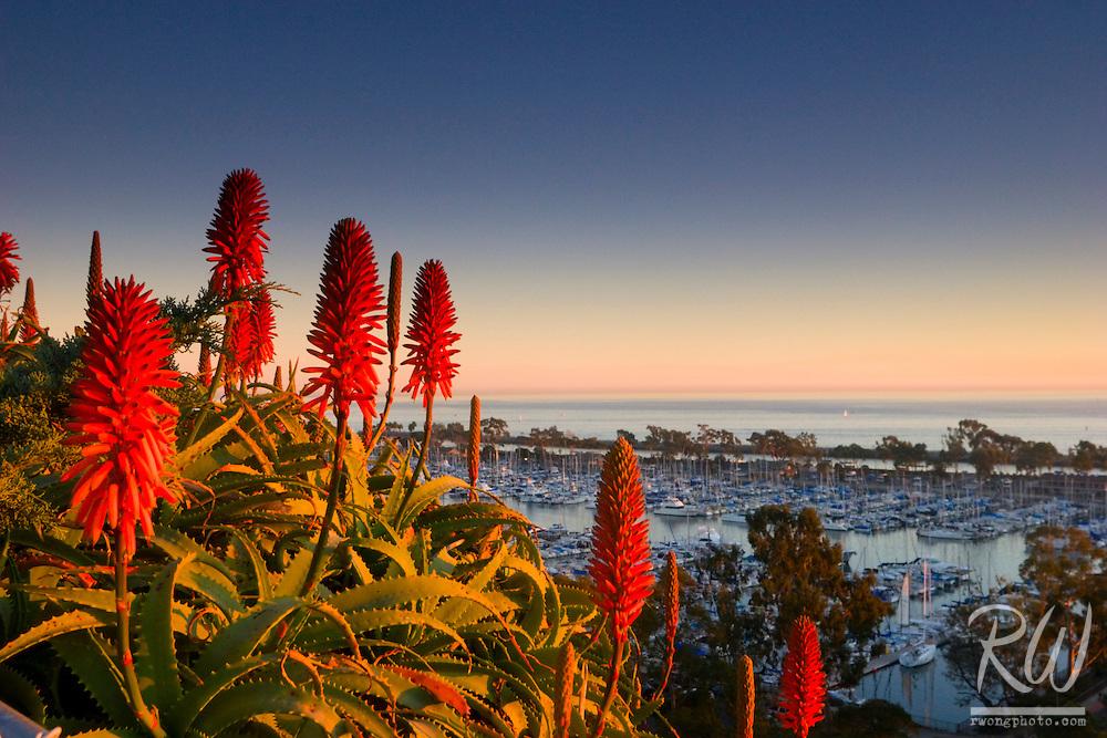 Aloe Vera Flowers and Dana Point Harbor Scenic Vista, Orange County, California