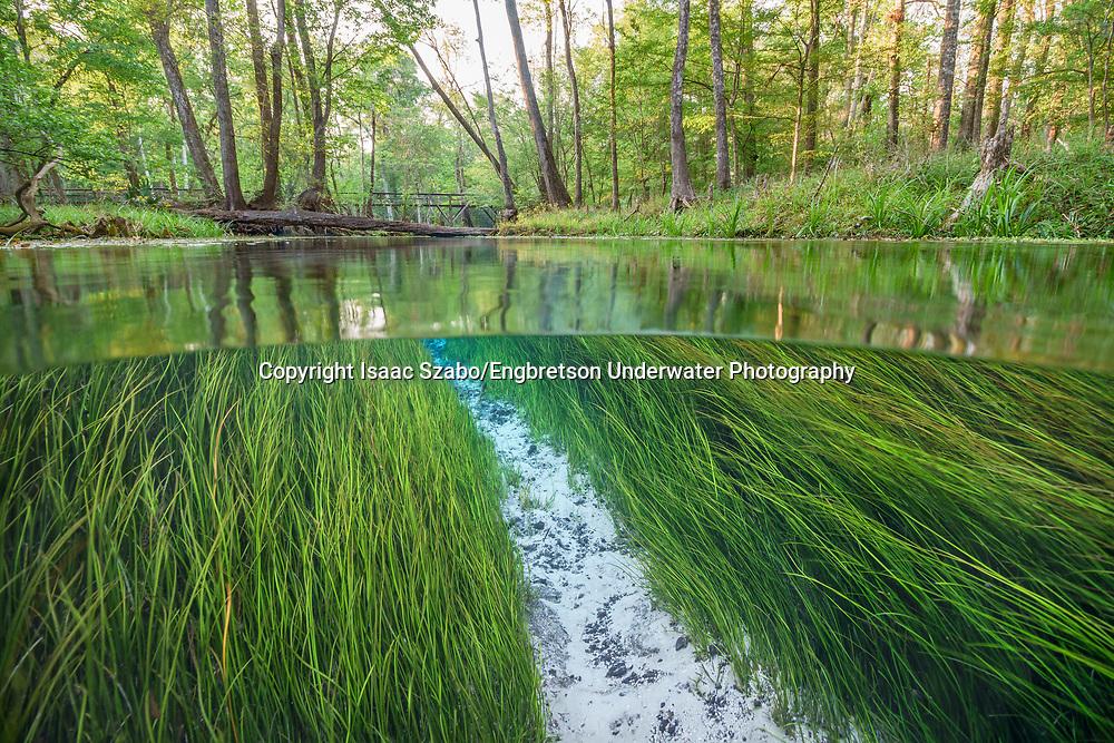 Underwater Scene (Florida Springs)<br /> <br /> Isaac Szabo/Engbretson Underwater Photography