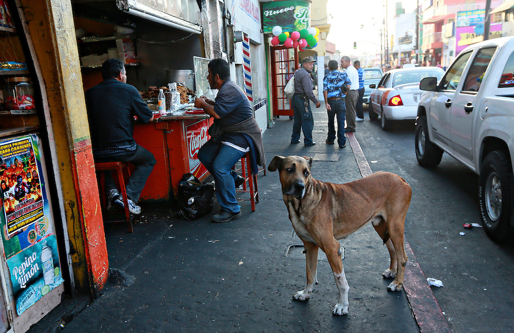 A street scene with a stray dog in Downtown Tijuana, Mexico on Wednesday, October 8, 2014.(Photo by Sandy Huffaker for The New York Times)