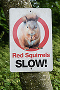 """Red Squirrels SLOW!"" sign. Brownber Hall Country House near Kirkby Stephen, in Yorkshire Dales National Park, Cumbria county, England, United Kingdom, Europe. England Coast to Coast hike day 6 of 14: Ullswater to Kirkby Stephen. [This image, commissioned by Wilderness Travel, is not available to any other agency providing group travel in the UK, but may otherwise be licensable from Tom Dempsey – please inquire at PhotoSeek.com.]"