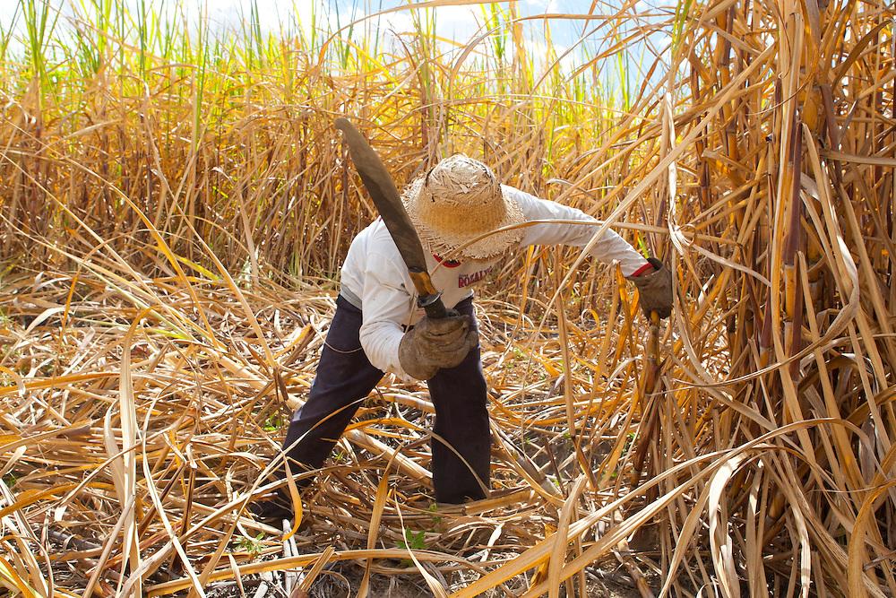Salinas_MG, Brasil.<br /> <br /> Trabalhadores rurais durante a colheita de cana de acucar para producao de cachaca no municipio de Salinas, Minas Gerais.<br /> <br /> Agricultural workers during the sugar cane harvest for production of cachaca in Salinas, Minas Gerais.<br /> <br /> Foto: RODRIGO LIMA / NITRO