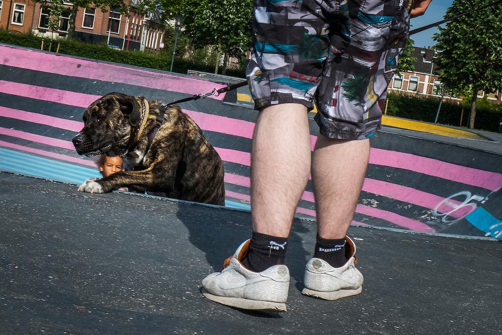 Nederland, Utrecht, 20 mei 2014<br /> Met de hond bij de skateramp in het Griftpark. <br /> Hond probeert naar boven te klimmen.<br /> Foto (c) Michiel Wijnbergh
