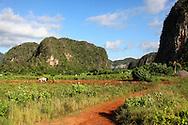 Farming near Vinales, El Moncada, Pinar del Rio, Cuba.