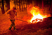 02 JUNE 2011 - ALPINE, AZ: A resident of Alpine attacks a spot fire in the Chapache development at the Wallow Fire near Alpine. High winds and temperatures complicated firefighters' efforts to get the blaze under control. Officials have issued a mandatory evacuation order and residents of the Alpine area had to leave by 8PM Thursday.   PHOTO BY JACK KURTZ
