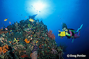 diver on Liberty Wreck, Bali, Indonesia MR 270