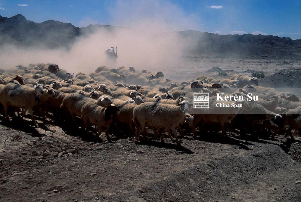 Herding sheep in the sand storm, Xinjiang Province, Silk Road, China