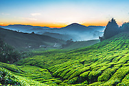 The Cameron Highlands is the name of a scenic hill station in the state of Pahang in Malaysia which dates from the 19th century. it's located at almost 2000 meters at its highest point.Cameron Highlands is also the leading producer of flowers and tea in Malaysia