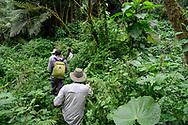 Touristen auf einer Berggorilla-Tour, Bwindi Forest, Uganda<br /> <br /> Tourists on a mountain gorilla tour, Bwindi Forest, Uganda