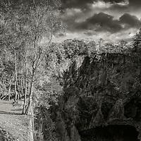 Birches, Hodge Close quarry, Cumbria