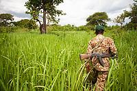 An UWA ranger patrols through elephant grass in Queen Elizabeth National Park