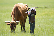 A small boy looks after his families cows in Lesotho. Often children are kept back from going to school to help look after the animals and help on the farm.