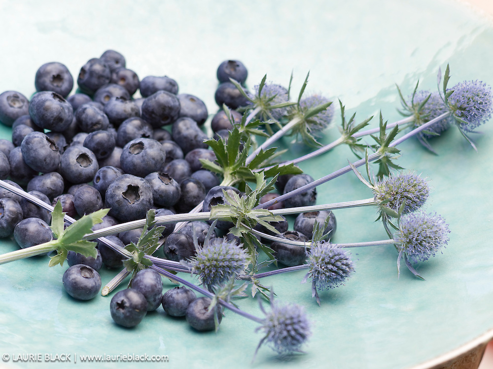 Blueberries and blue thistle still life