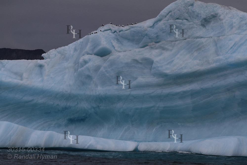 Kittiwakes sit atop iceberg north of Smeerenburgfjorden along coast of Spitsbergen island; Svalbard, Norway.