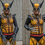Cosplayer in his Wolverine  costume.<br /> <br /> Wolverine commonly known as Logan is a fictional character appearing in Marvel Comics.  Mostly association with the X-Men. He is a mutant who possesses animal-keen senses, enhanced physical capabilities, powerful regenerative ability known as a healing factor, and three retractable bone claws in each hand. Wolverine has been depicted variously as a member of the X-M<br /> <br /> Cosplay, a contraction of the words costume play, is a performance art in which participants called cosplayers wear costumes and fashion accessories to represent a specific character.<br /> <br /> Cosplayers often interact to create a subculture and a broader use of the term &quot;cosplay&quot; applies to any costumed role-playing in venues apart from the stage. Any entity that lends itself to dramatic interpretation may be taken up as a subject and it is not unusual to see genders switched. Favorite sources include manga and anime, comic books and cartoons, video games, and live-action films and television series.<br /> <br /> The New York Comic Con convention, is a celebration of comic books, graphic novels, sci-fi and video games, toys, movies and television. The convention brings together celebrities as well as fans of fantasy role playing, Comic-Con is the business of pop culture.