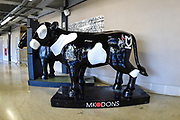Concrete Cows during the EFL Sky Bet League 2 match between Milton Keynes Dons and Grimsby Town FC at stadium:mk, Milton Keynes, England on 21 August 2018.
