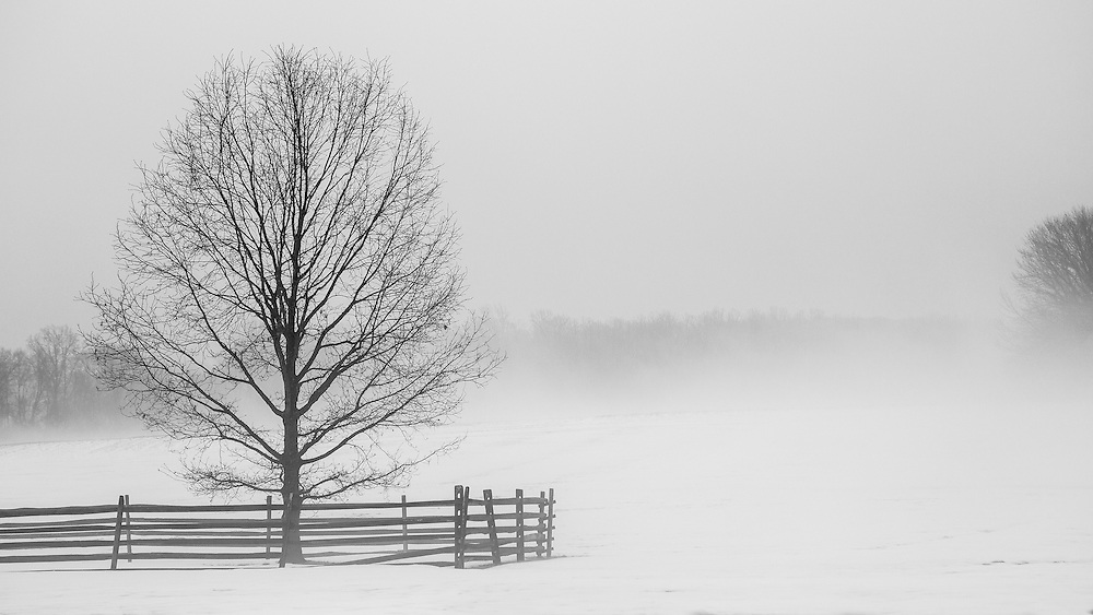 A foggy, winter day a the Princeton Battlefield.