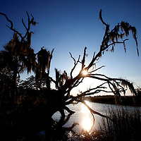 LITTLE ST. SIMONS ISLAND, FL -- October 1, 2010 -- The sun sets over a fallen tree on Little St. Simons Island on Friday, October 1, 2010.   The 10,000 acres of marshland, beaches, and forests are a refuge for wildlife and vacationers alike with only 32 guests permitted a night.  (Chip Litherland for Bay Magazine)