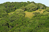 Ongoye Forest Nature Reserve