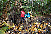 Freddy Akuffo talking with neigbouring cocoa farmers...Freddy Akuffo has been a cocoa farmer since 1969 when he inherited his farm from his father. Since he received his training, as part of the Kraft Cocoa Partnership, Freddy has seen his yield increase from 180 bags of cocoa a year to 220.