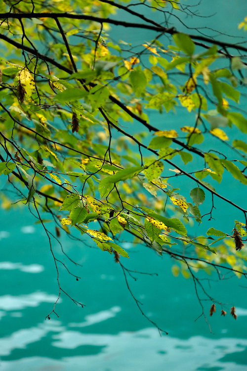 Autumn leaves and turquoise colour of the waters of Plitvice Lakes, Croatia.