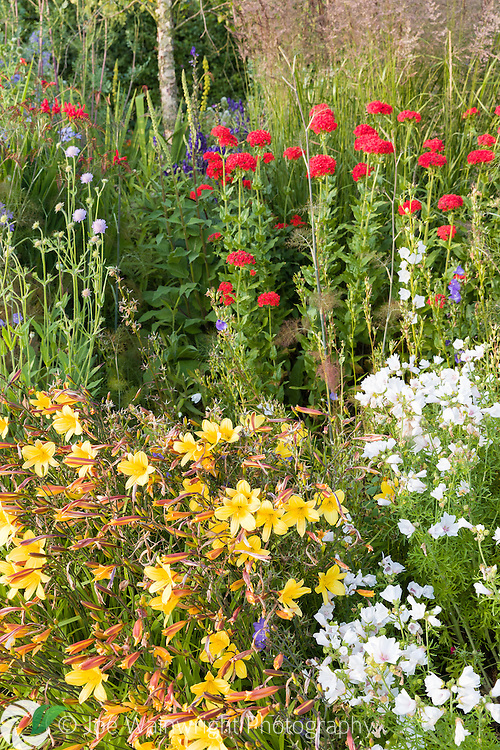 A long herbaceous border at Bluebell Cottage Gardens, Cheshire, featuring plants such as Lychnis chalcedonica, Hemerocallis, Scabious and Campanulas