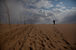 A man walks in the Taminchagan desert where some trees has been planted to combat desertification in Kunlun Qi of the Inner Mongolia Autonomous Region, China on 23 April 2011. Inner Mongolia, China's third largest province, is fighting severe desertification, much like the provinces of Xinjiang, Gansu, Qinghai, Ningxia, Shaanxi, Heilongjiang and Hebei. Over-grazing, logging, expanding farms and population pressure, along with droughts have steadily turned once fertile grasslands into sandy plains. China has adopted measures to stop the land degradation such as reforestation, resettling nomadic Mongolians from grasslands to urban areas and restricting grazing areas. The forced removal of nomadic tribes from their traditional pastures to reduce over-grazing however remains controversial as opponents of the government's plan say herders who have grazed the grasslands for centuries are key to solving the problem while restricting them to one place would instead result in even more serious denudation of the areas they were resettled in. Tree planting has become a key government effort to combat desertification and supporting the government's reforestation endeavors are numerous non-governmental organizations (NGOs), such as Shanghai Roots & Shoots. The NGO launched the Million Tree Project in 2007 in Kulun Qi with aims to plant its first million trees by 2014 to hinder the expanding desert. To-date, they have planted more than 600,000 trees.