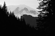 Black and White of Rainier peaking through trees - Mt. Rainier National Park, WA
