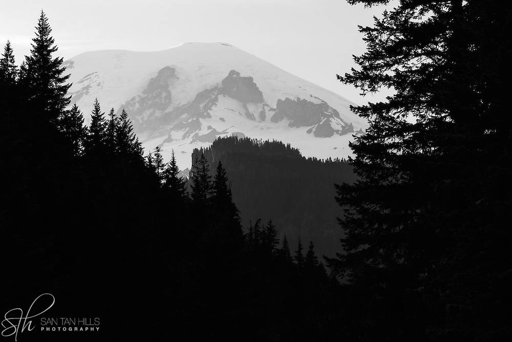 Black and White of Rainier peaking through trees - Mt. Rainier National Park, WA