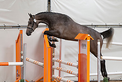 057 - Elwica DN<br /> KWPN Paardendagen - Ermelo 2012<br /> © Dirk Caremans