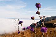 Belo Horizonte_MG, Brasil...Flores no Topo do Mundo localizado na Serra da Moeda com neblina ao fundo...Flowers in the Topo do Mundo located in Serra da Moeda with the fog in the background...FOTO: LEO DRUMOND /  NITRO