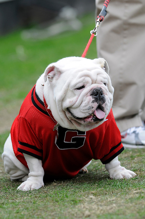 January 1, 2009: Mascot UGA VII of the Georgia Bulldogs in action during the NCAA football game between the Michigan State Spartans and the Georgia Bulldogs in the Capital One Bowl. The Bulldogs defeated the Spartans 24-12.