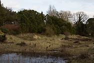 Hortus Haren - heidetuin