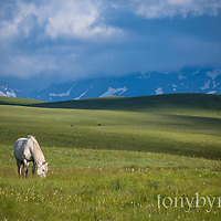 rocky mountain front glacier national park blackfeet reservation horses montana