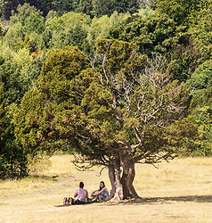 © Licensed to London News Pictures. 12/08/2020. Surrey, UK. Calm before the storms. As the heatwave continues to hit England with temperatures in excess of 34c, picnickers shelter under a tree on the parched hilly slopes on Box Hill in Surrey. Weather forecasters have predicted that thunderstorms with heavy rain are likely to hit Surrey and London later tonight with the Met Office issuing a yellow weather warning for thunderstorms in the South East with risk of flooding and travel disruption. Photo credit: Alex Lentati/LNP