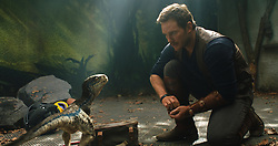 RELEASE DATE: June 22, 2018 TITLE: Jurassic World: Fallen Kingdom STUDIO: Universal Pictures DIRECTOR: J.A. Bayona PLOT: When the island's dormant volcano begins roaring to life, Owen and Claire mount a campaign to rescue the remaining dinosaurs from this extinction-level event. STARRING: CHRIS PRATT as Owen. (Credit Image: ? Universal Pictures/Entertainment Pictures/ZUMAPRESS.com)