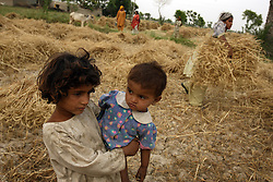 Relatives of Mukhtar Mai harvest wheat in her village, Meerwala, Pakistan, April 28, 2005. Mai, 33, went against the Pakistani tradition of committing suicide when she brought charges against the men who gang raped her nearly three years ago. Most of her family opposes her fight for justice against her attackers.