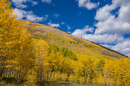 Fall foliage in the Castle Creek Valley of Aspen, Colorado.