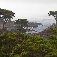 USA, California, Monterey. Monterey Cypress trees along 17-Mile Drive.