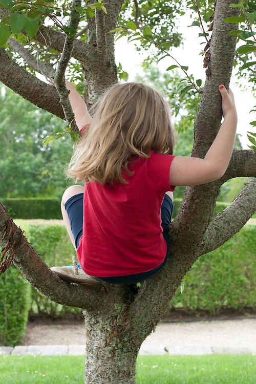 Greta's Tree Limbs, Nantucket, Massachusetts, 2013