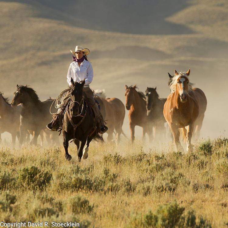 Keri Trexler, Trexler Angus Ranch, Hamilton, Montana
