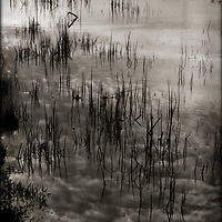 The surface of a tranquil lake reflects reeds growing along the shore.