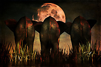 There is something both mystical and majestic to this stunning Family Portrait piece. The scene depicts three elephants facing the moon, standing over tall grass. The moon is one of the first things that is likely to capture your attention, but the detail of the elephants, all of whom are facing the moon ahead, is something else to this piece that is worth appreciating. The elephants represent something very physical. He same can be said for the moon. Yet when combined, there is something about this piece that is almost spiritual. Available to be printed on canvas, metal, acryl, as a framed print, or across a range of interior products.